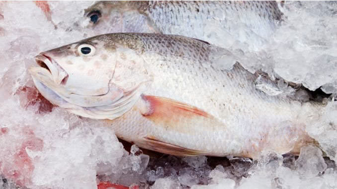 How to remove the Fishy Smell from the Freezer - Trendy House Guide